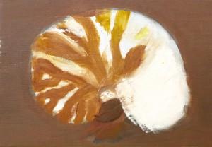 オウム貝の模様をしっかり観察しているね。(未完成)