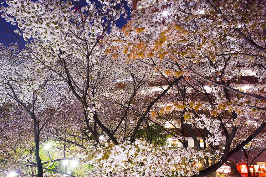 mitaka夜桜2018
