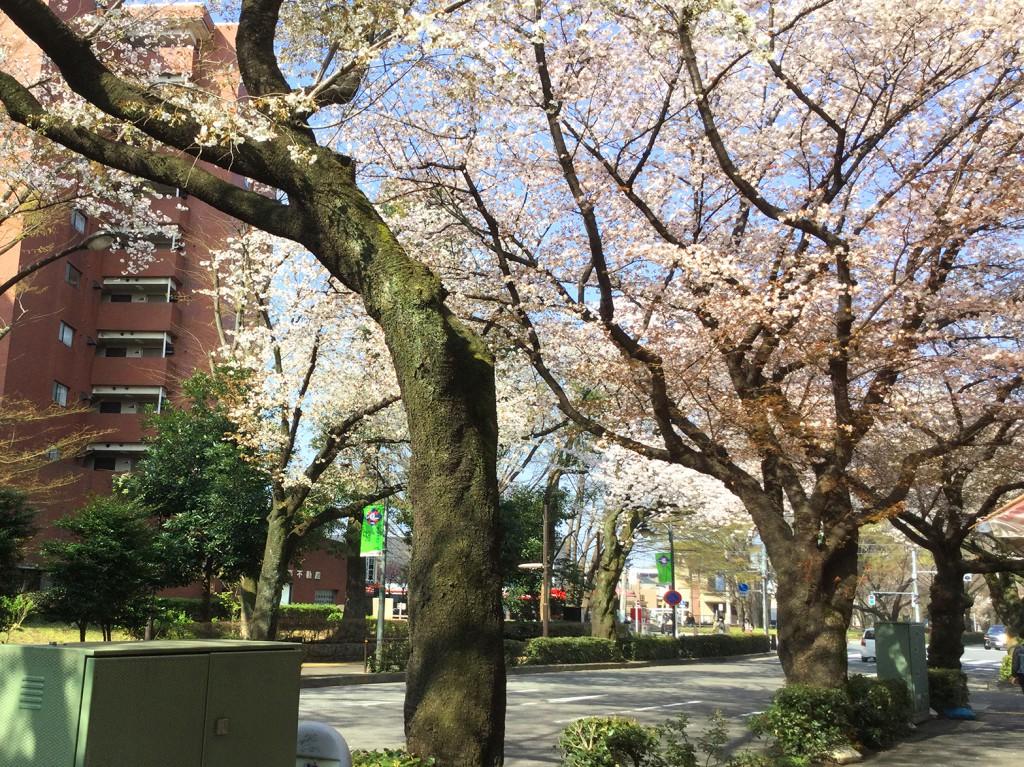 mitaka_sakura_2018_05