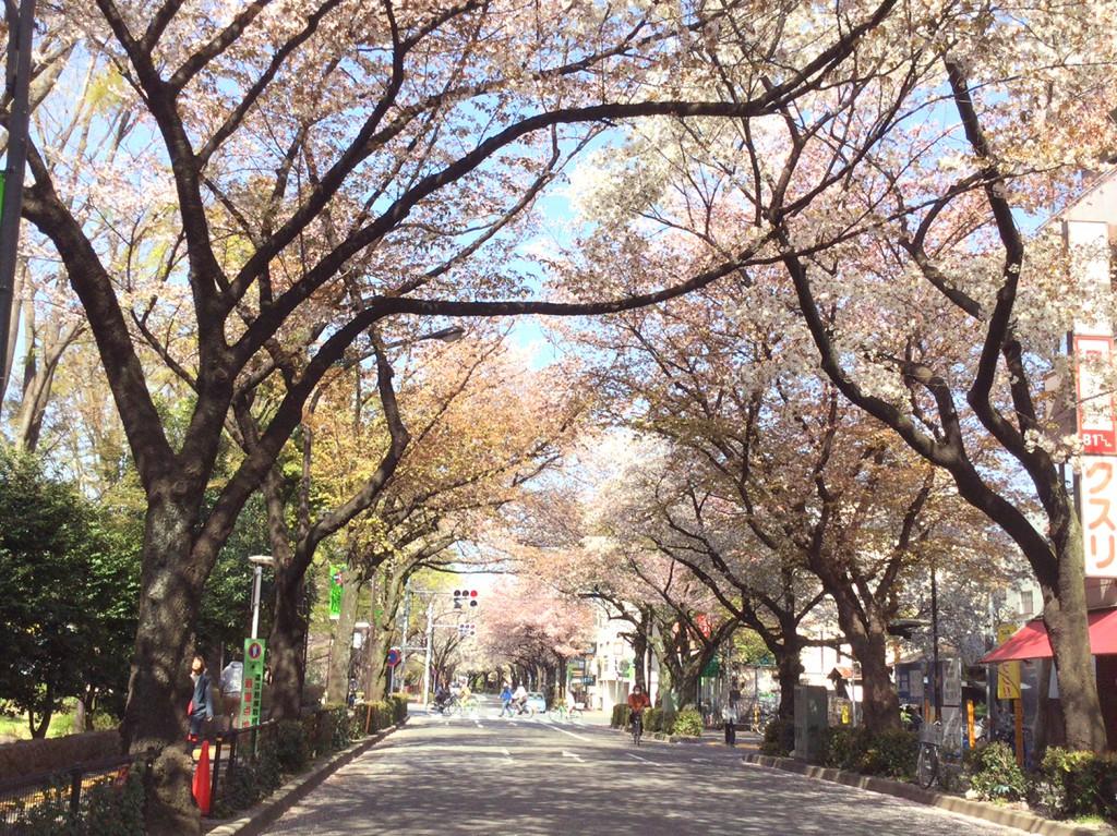 mitaka_sakura_2018_07mini